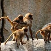 Monkey Family Poster