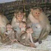 Monkey Family Tiruvannamalai India Poster