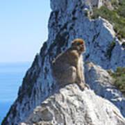 Monkey In Gibraltar Poster