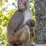 Monkey Mom Poster