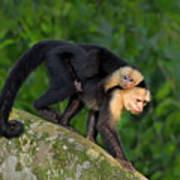 Monkey On My Back Poster