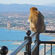 Monkey Overlooking Spain Poster