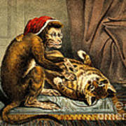 Monkey Physician Examining Cat For Fleas Poster