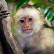 Monkey Portrait Poster