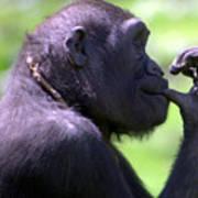 Monkey Thinking Poster