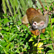 Monkey Time Poster