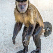 Monkey_0726 Poster