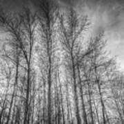 Monochrome Sunset Trees Poster