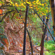 Monrovia Canyon In Fall Poster