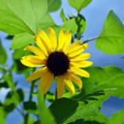 Monsoon Sunflower Poster