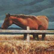 Montana Mare Study Poster
