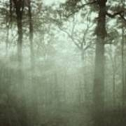 Moody Foggy Forest Poster