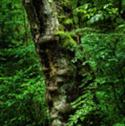 Moody Tree In Forest Poster