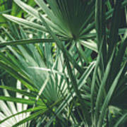 Moody Tropical Leaves Poster