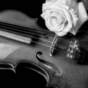 Moody Violin And Rose In Black And White Poster