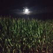 Moon Stalk Poster