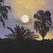 Moonlit Palms In Tampa Poster