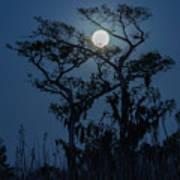 Moonrise Over Wetlands Poster