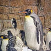 More Snow - King Penguin Poster