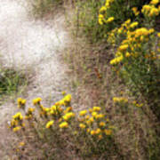 Morning Dew At Pendleton Park Poster