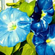 Morning Glories In Blue Poster by Janis Grau