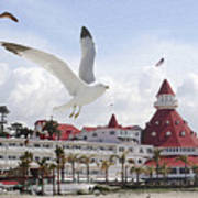 Morning Gulls On Coronado Poster