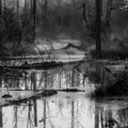 Morning In The Swamp Poster