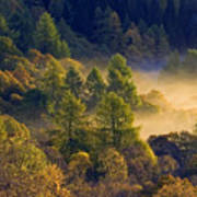 Morning Mist In The Trossachs Poster