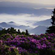 Morning On Grassy Ridge Bald Poster by Rob Travis