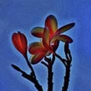 Morning Plumeria Poster