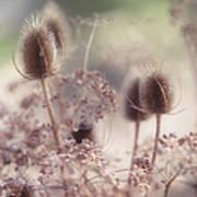 Morning Softness. Wild Grass Poster