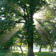 Morning Tree Poster