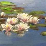Morning Water Lilies Poster