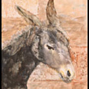 Moroccan Donkey Poster