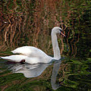 Mosaic Curious Swan  Poster