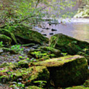 Moss Covered Boulders Poster