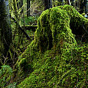 Moss Covered Tree Stump Poster