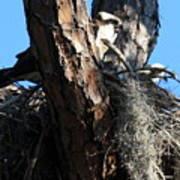 Moss Nest Poster