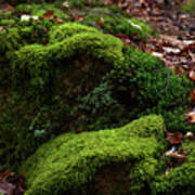 Mossy Rocks In Spring Woods Poster
