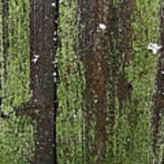 Mossy Winter Fence Poster