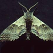 Moth At Texaco Station Poster