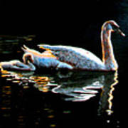 Mother and Baby Swan Poster