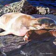 Mother And Child Sea Lion Poster