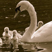 Mother Swan Poster