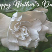 Mother's Day Gardenia Poster