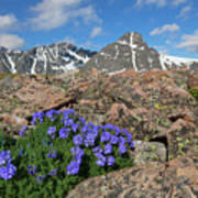 Mount Holy Cross With Wildflowers 2 Poster