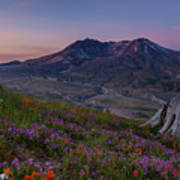 Mount St Helens Spring Colors Poster