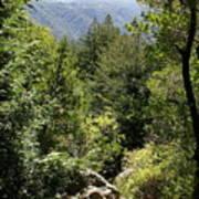 Mount Tamalpais Forest View Poster