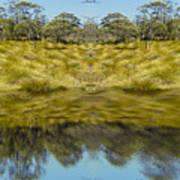 Mountain Button Grass Poster