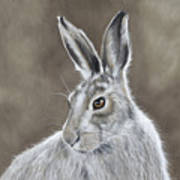 Mountain Hare Poster